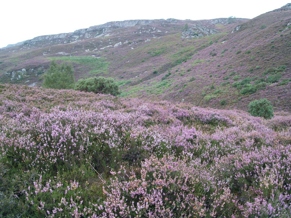 Glens of Heather